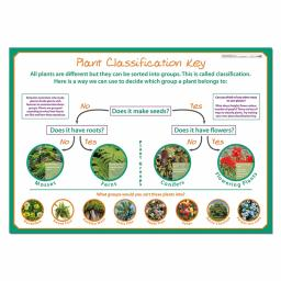 Classifying Plants poster