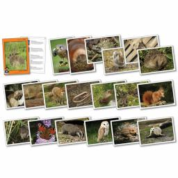 Wildlife In Britain Photopack