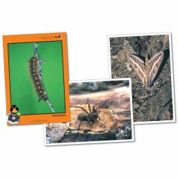 Minibeasts Photopack