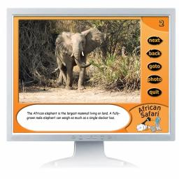 African Safari Digital Photopack