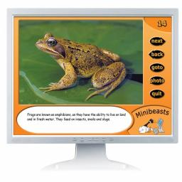 Minibeasts Digital Photopack