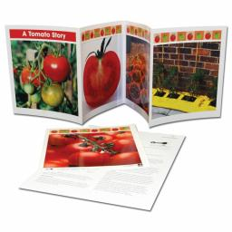 A Tomato Story - Life Cycle Frieze