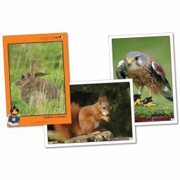 Wildlife In Britain Photopack