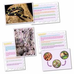 Thinking About - Life Cycles and Food Chains