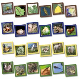 Animal Life Cycle Sequencing Cards