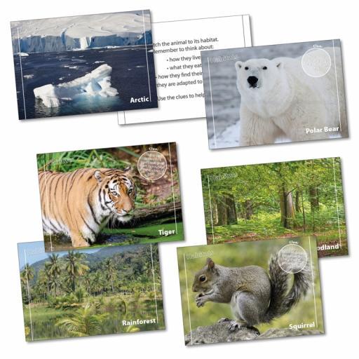 Habitats Matching Cards