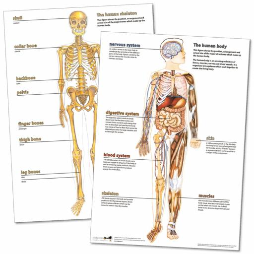 Human Body Deskmats