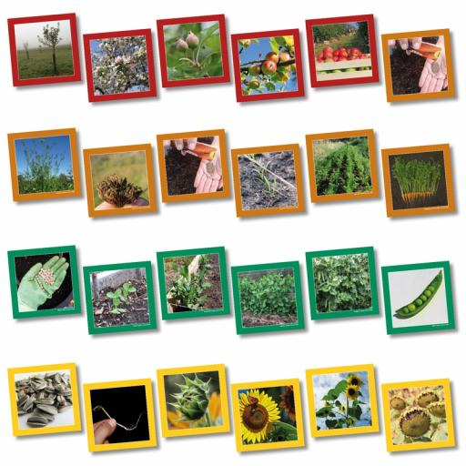 Plant Life Cycle Sequencing Cards