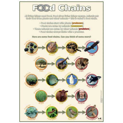 Food Chains poster
