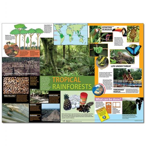 Tropical Rainforest Poster