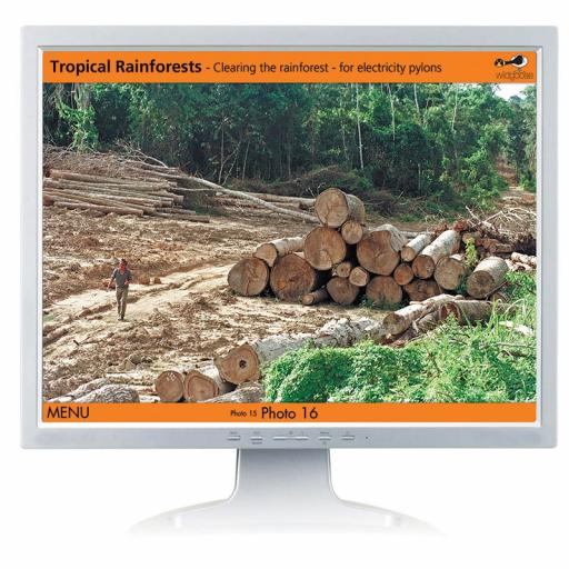 Tropical Rainforest Digital Photopack