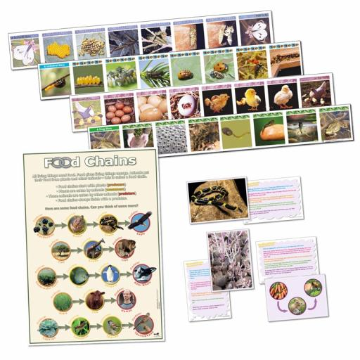 Life Cycle and Food Chains Bundle