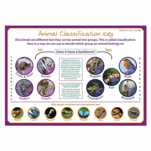 Classifying Animals poster