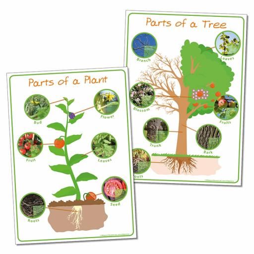 Parts of a Plant & Parts of a Tree posters