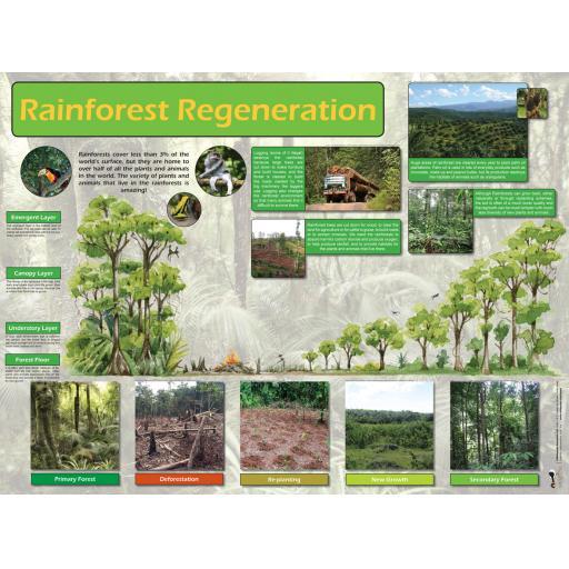 Rainforest Regeneration Poster cat.jpg